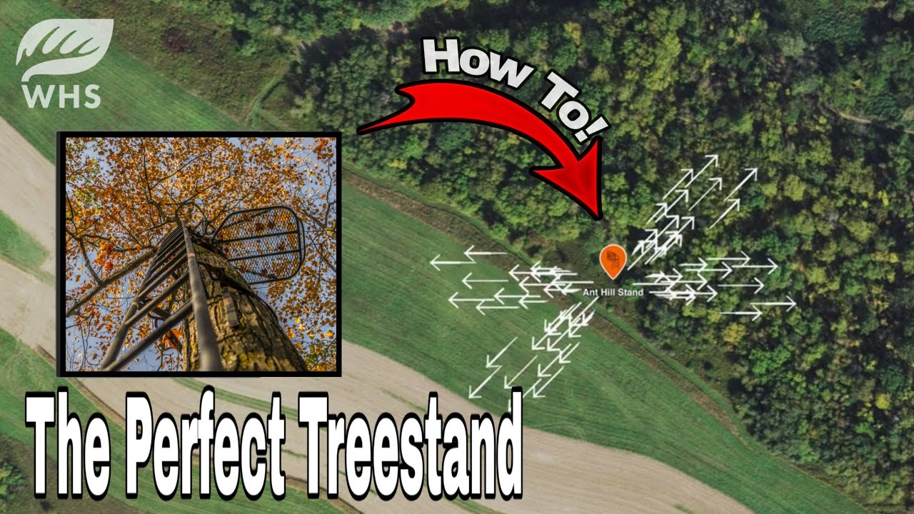The Perfect Treestand Setup For Bowhunting Whitetails