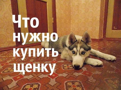 Что нужно купить щенку.