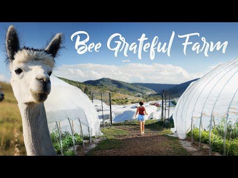 Organic Farm at 7,000ft + Alpacas, Caramel Candy, and a Onewheel!