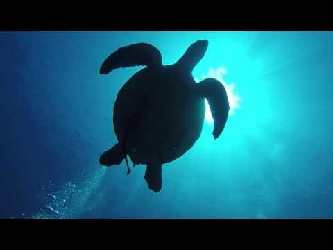 lombok underwater explorer
