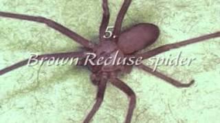 Top 10 Venomous Spiders