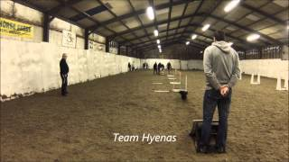 Wilmslow Wild Dogs Flyball Team Training 1