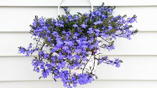Decogarden Jardinería: Plantas colgantes y abonos específicos