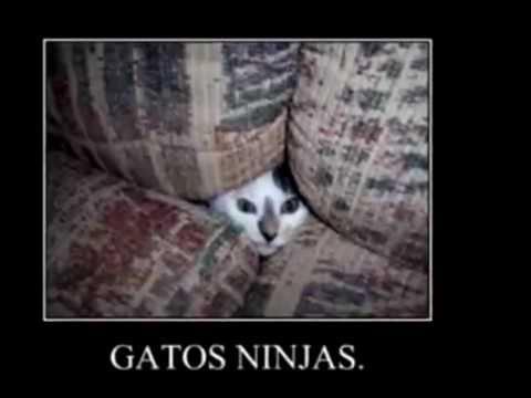 Los gatos ninja más graciosos