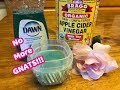 How To Get Rid of Gnats!!! Inside The House...