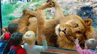 Download FUNNY Animals Trolling Babies and Kid in The Zoo|| Funny Baby and Pet Mp3 and Videos