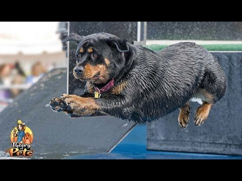 TOP #73: The Competitive Dog Sport of Dock Diving
