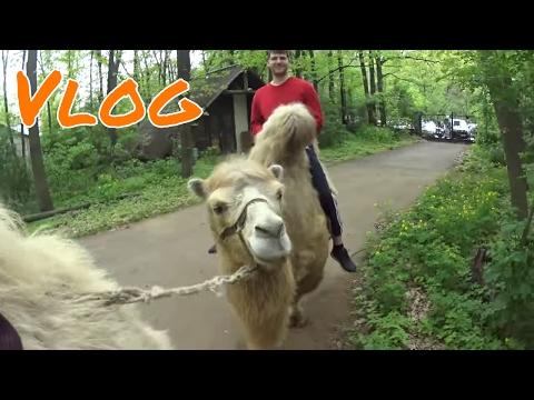 Nyiregyhaza Sosto ZOO - Best Zoo in Europe FULL Vlog ! 2017