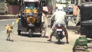 Karnal   Nagar  Nigam  Dogs  Nasbandi  Scandal   Breaking