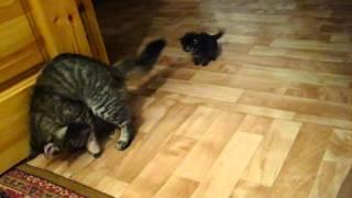 угарная кошка с котятами