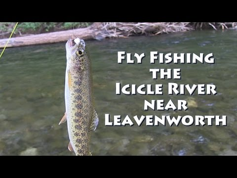 Fly Fishing the Icicle River