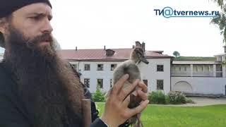 """""""Монастырь – образ рая"""": как уживаются утки, кролик и монах-карикатурист"""