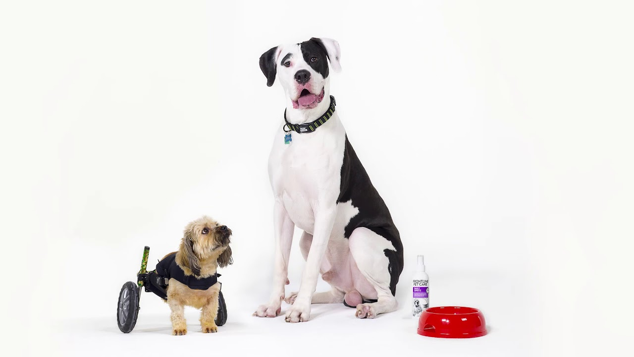 FRONTLINE Pet Care 'Real Pets' UK – with Gok Wan