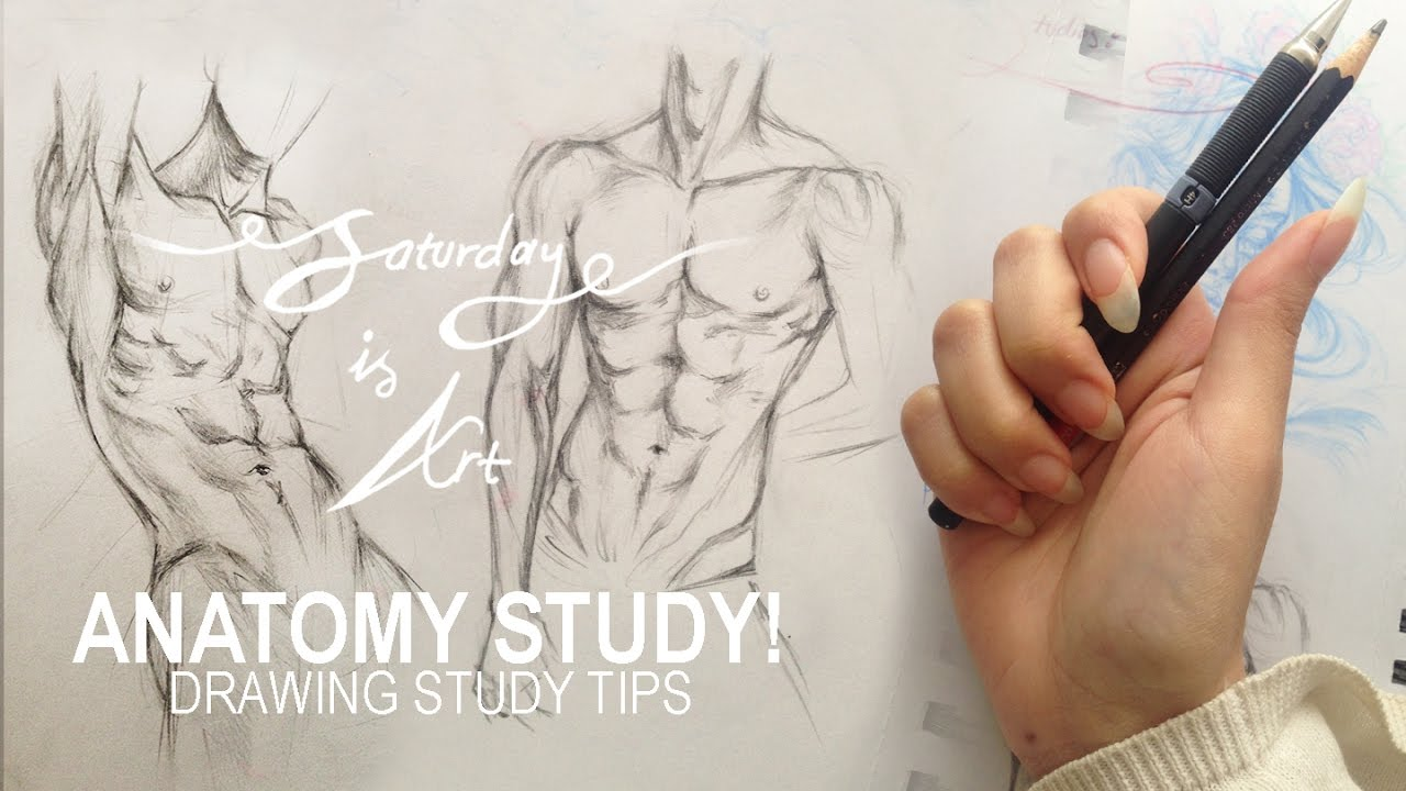 ♨ ANATOMY Study \\\\ Detailing comes LAST!! (starting a sketchbook ...