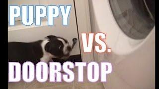 Puppy Vs. Doorstop