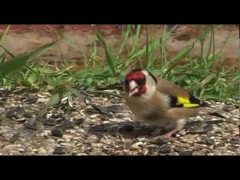 youtube filmek - Nagyvárosi madarak