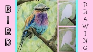 Bird Speed Drawing: Drawing A Realistic Bird In Coloured Pencil