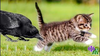 Котенок закричал и бросился бежать. Наглая ворона не отставала и продолжала тюкать малыша в шею