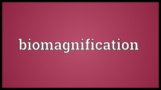 Biomagnification Meaning