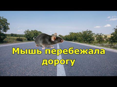 Мышь перебежала дорогу. Народная примета.