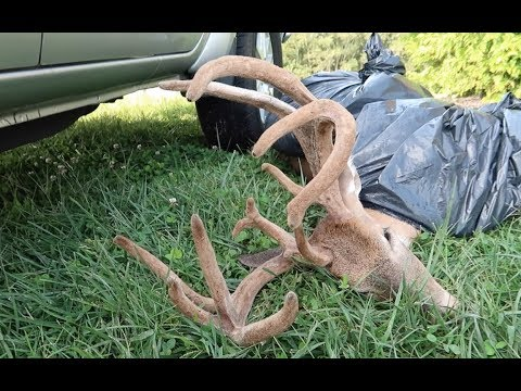 ARCHERY HUNTING KENTUCKY WHITETAILS: PART #3 FIRST SHOOTER STEPPED OUT