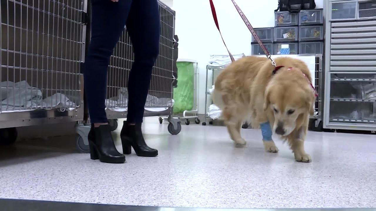 Dog who beat cancer to be featured in Super Bowl ad