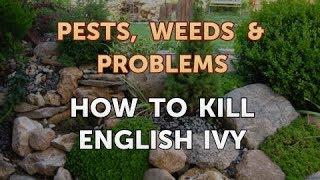 How to Kill English Ivy