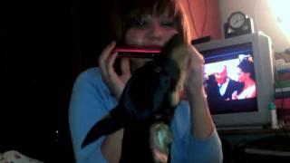 Miniature Pinscher 4 Months Old Zeus Singing Better Than Bieber!