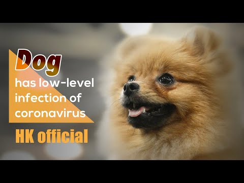 On The Scene   Dog Has Low-level Infection Of Coronavirus: HK Official