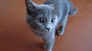 Маленький Котёнок. Усатик (Animals. Pet World)