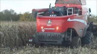 Récolte du Mais grain en condition très difficile
