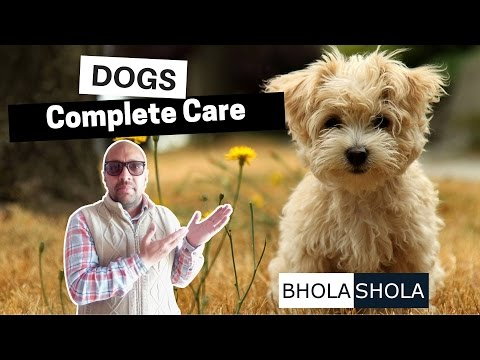 Bhola Shola - We Care for your Puppy   Dog   Pets   Harwinder Singh Grewal