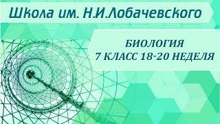 Биология 7 класс 18-20 неделя Класс Жгутиконосцы. Тип Инфузории