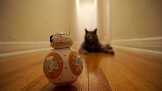 Mochi the Cat Meets BB8 from Star Wars: The Force Awakens