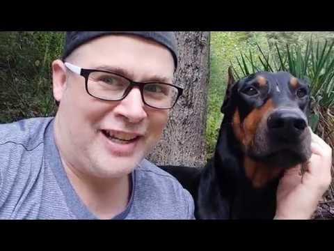Doberman Pinscher BEFORE You Adopt UPDATE part 2