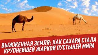 Выжженная земля: как Сахара стала крупнейшей жаркой пустыней мира - Физики и лирики