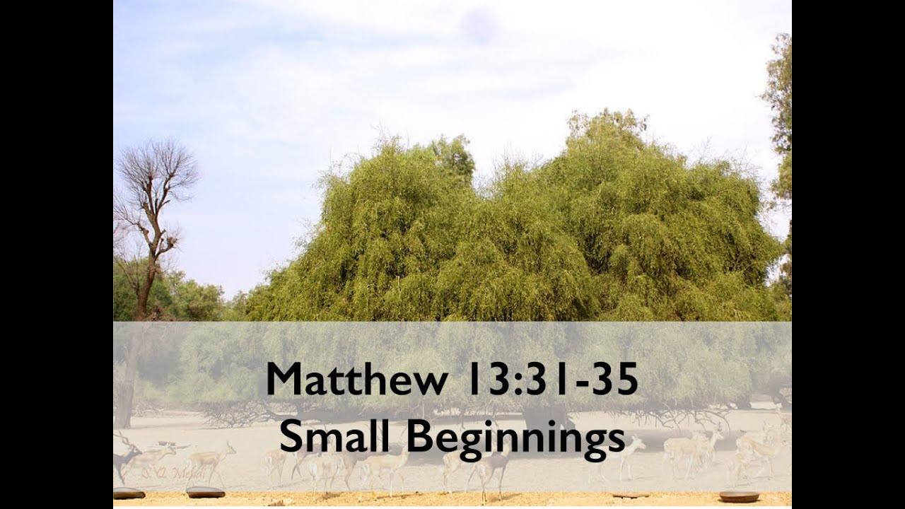Image result for matthew 13:31