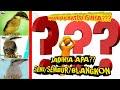 Review  Cendet Trotol Hasil Perawatan   Bulan Dari Lolohan  Mp3 - Mp4 Download