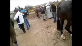 Marche a bestiaux de sidi belabes