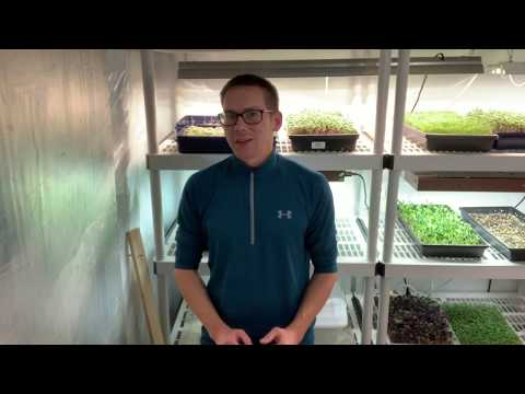 How To Sell Microgreens