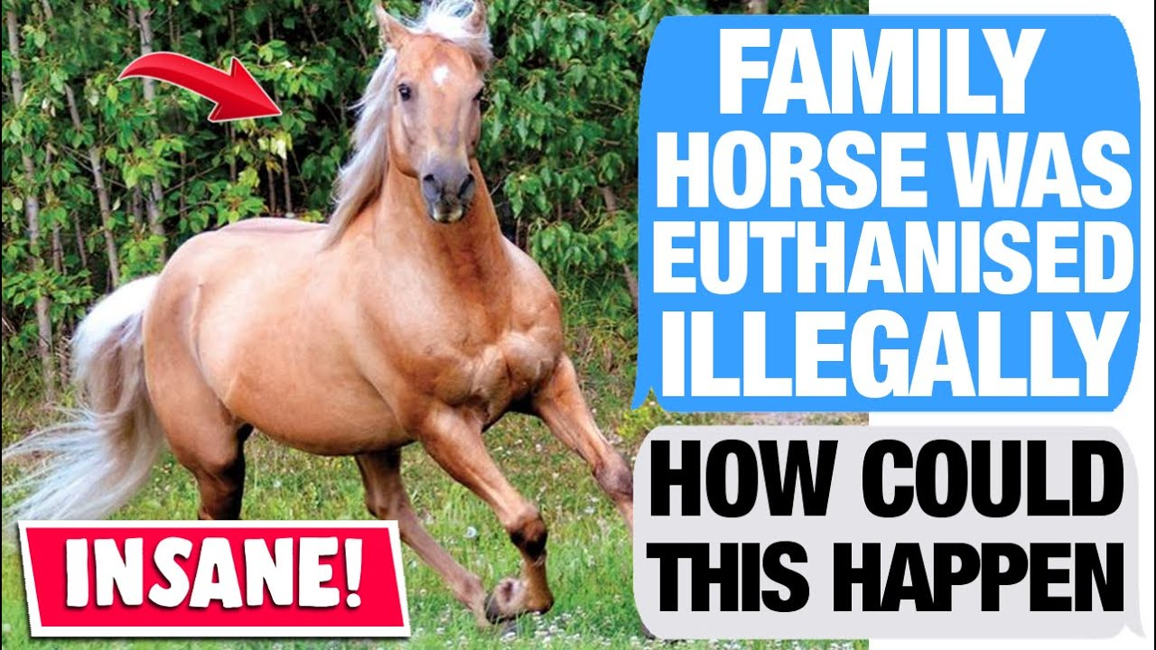 r/LegalAdvice - Equestrian Centre Covering Up Horse Murder?