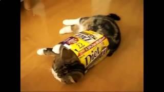 Cat Maru loves boxes, Котик - Мару любит коробки !!!