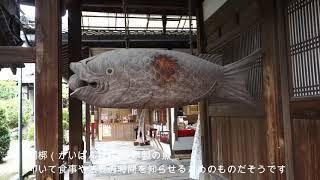蝉の声、これが日本の夏 京都宇治、黄檗山萬福寺を訪ねる