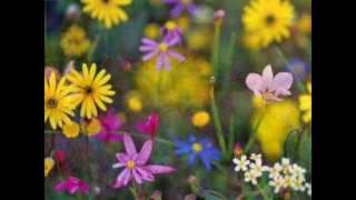 """Violin Sonata #5 in F Major """"Spring"""" Op. 24 - II.  Adagio molto espressivo (Beethoven)"""