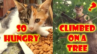 The Alley Cats And Kittens Meowing Because  So hungry (Cute cats- cat food)