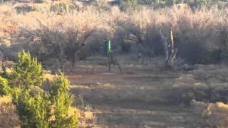 Wild pig hunting at my Texas Ranch