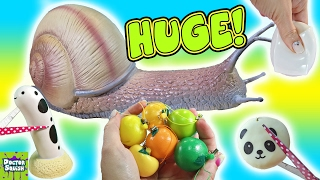 Hey Guys! Doctor Squish here! I am cutting open more squishy toys t...