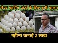 How to Start Layer Poultry Farming Business in India , अंडा उत्पादन व्यवसाय In HIndi