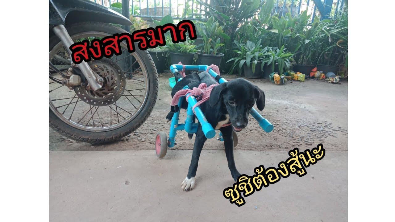 ทำรถวิวแชร์สำหรับหมาพิการ