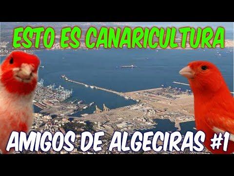 AMIGOS DE ALGECIRAS #1